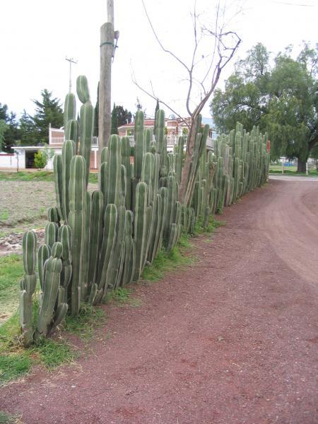 La clôture cactus : fini les problemes de voisinage !