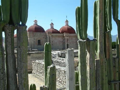 Des cactus délimitent les propriétés à Mitla.