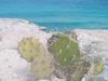 Cactus et mer turquoise à Islas Mujeres