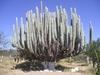 Splendide cactus sur le bord de la route