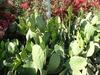 De très beaux cactus du côté d'Hermosillo