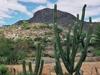 cactus en vue