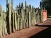 Une haie de cactus! pas de visite indésirable ainsi