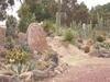 Voyage merveilleux au milieu des cactus
