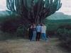 Très grand cactus du Sud du Mexique