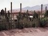 A Mitla, les cactus servent de murs pour délimiter les maisons