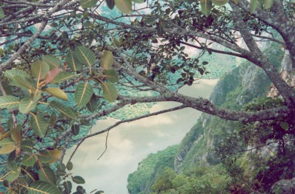 Cañon del Sumidero vu depuis un mirador d\'observation, à presque 1 000 mètres au dessus du fleuve.