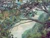 Cañon del Sumidero vu depuis un mirador d'observation, à presque 1 000 mètres au dessus du fleuve.