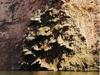 Une cascade au canyon qu'il nomme Sapin de Noël