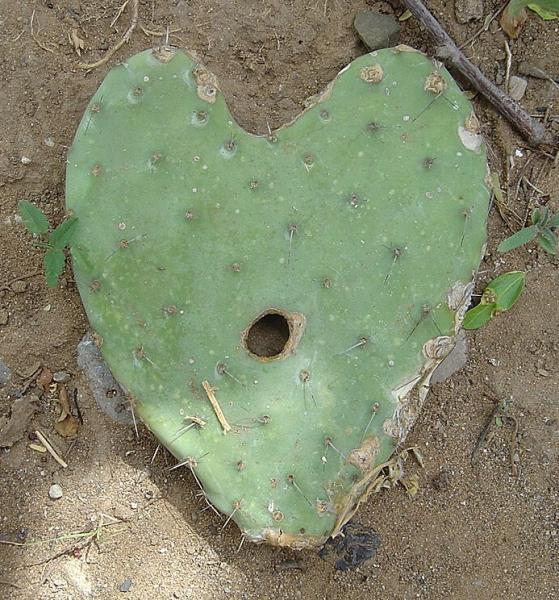 Il fallait la faire cette photo : un coeur brisé ? ou piquant ?