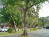 Playa del carmen: un arbre au milieu de la route ;-)