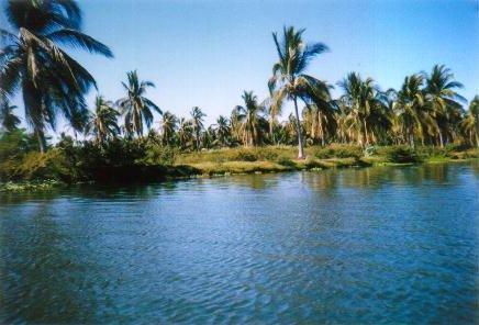Plantation de bananes au bord d\'un beau lagon bleu