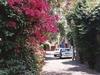 Une ruelle où il est très agréable de se promener dans la ville de Mexico