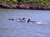 Los delfines de Topolobampo...