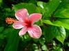 Fleur d'un petit restaurant sur une plage a coté du site archéologique de Tulum