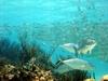 Plongee dans les eaux paradisiaques de Tulum