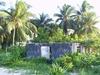 Cabane envahie par la forêt sur l'Isla Mujeres