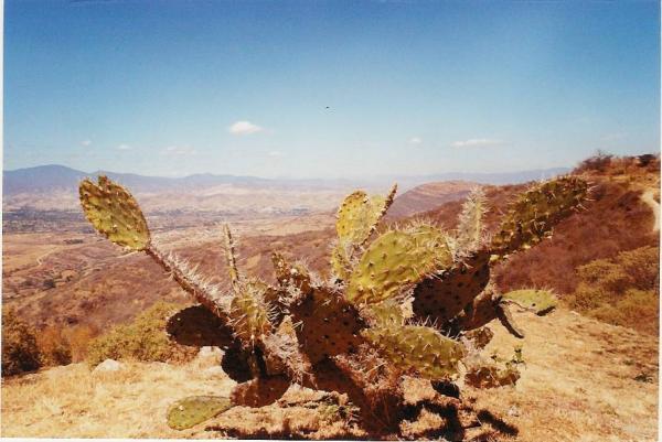 La vallée de Oaxaca vue depuis Monte Alban