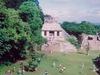 Une des nombreuses pyramides de Palenque