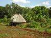 Maison au coeur de la forêt tropicale.