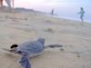 Voilà une photo de la naissance des tortues