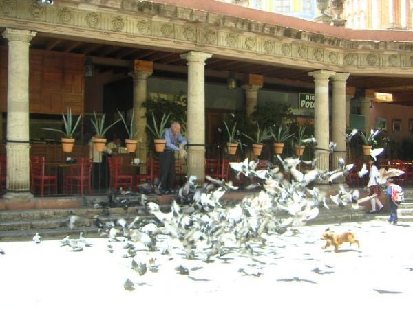 Le chien sème la terreur a San Miguel de Allende!!