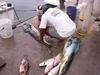 Retour de pêche à Puerto Aventuras sur la Rivièra maya