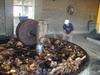 On écrase le coeur de l'agave pour en extraire la sève qui deviendra par la suite du Tequila