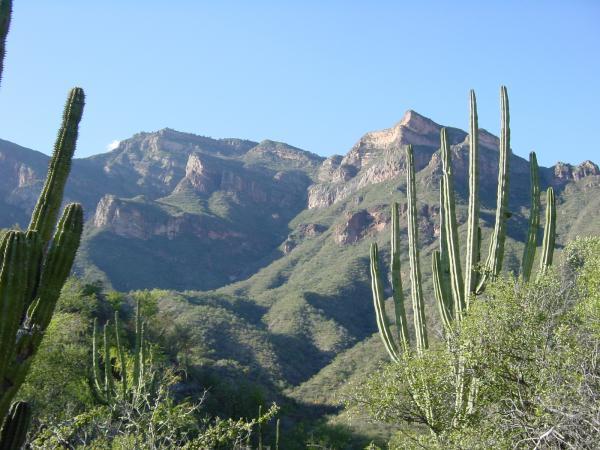 Cactus dans la Barranca del Cobre