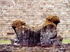 Le trone de Uxmal